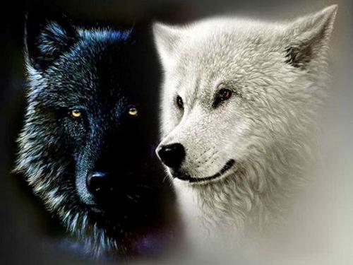 Kratky Pribeh K Zamysleni Dva Vlci Malujeme S Usmevem